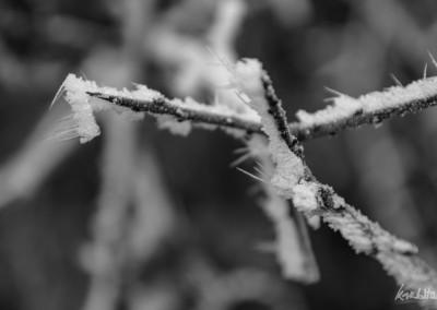 ice-01-2017-4824