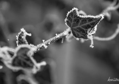 ice-01-2017-4886