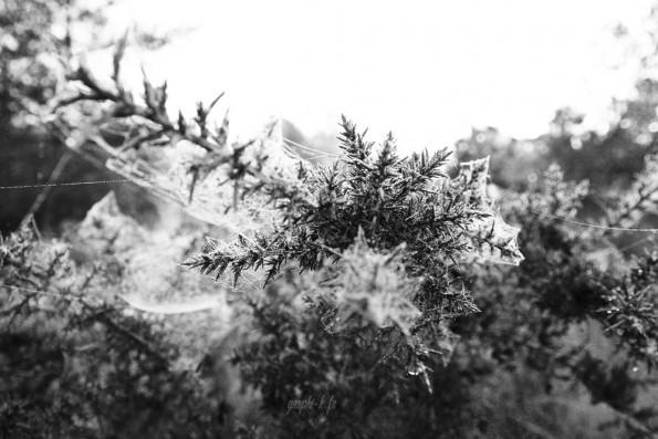 Un matin en forêt de Brocéliande