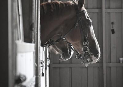 Samouraï | Equus Arte