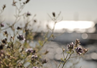 Groix_Nature-alentours Port Tudy-©Karlotta-dsgn